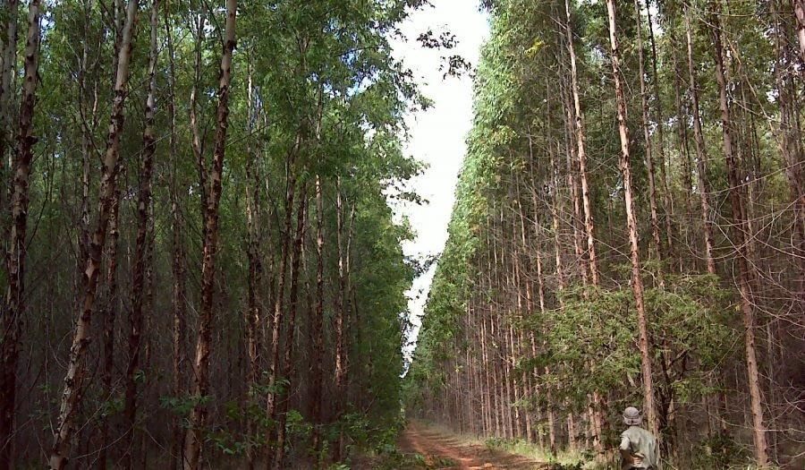 Consultoria Florestal: Qual a sua Importância?