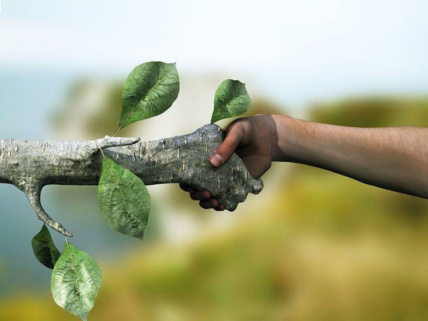 Produtos Florestais e Papel e Celulose